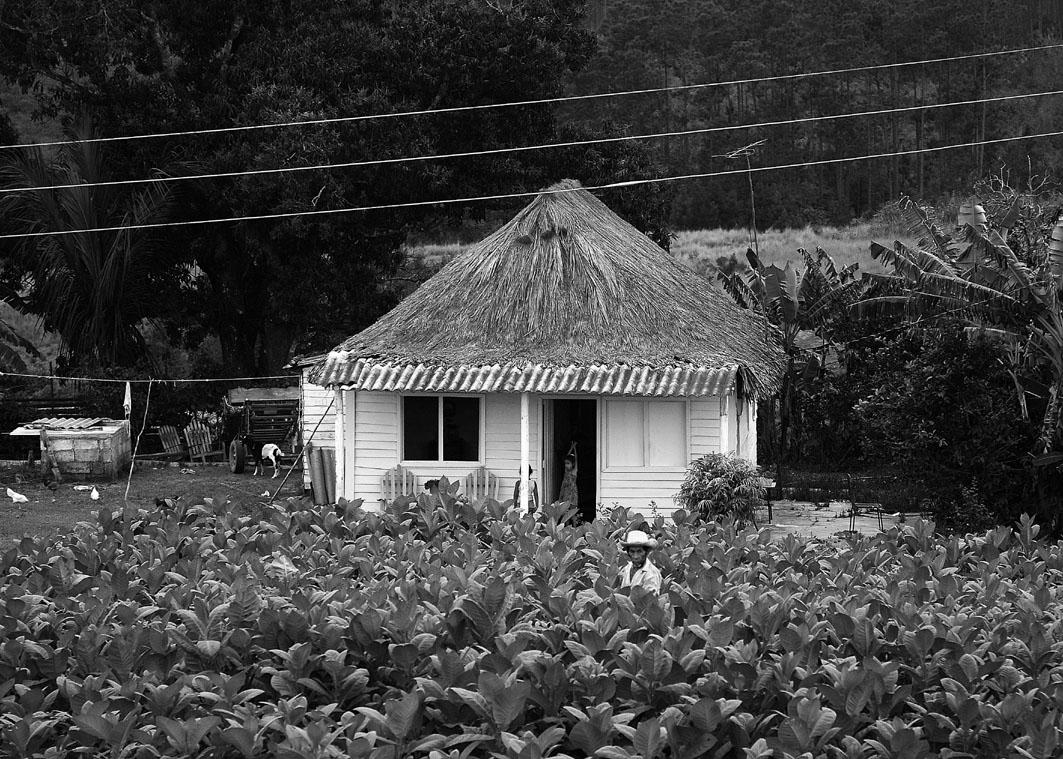 Típico bohío, casa tradicional del campesinado cubano que aún se mantiene en numerosas zonas de la Isla. Fotografía: Eduardo Camino.