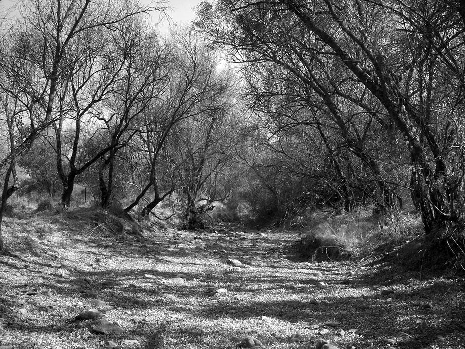 Río Milagros completamente seco a su paso por el norte de la provincia de Ciudad Real.Fotografía de Raúl Urquiaga.