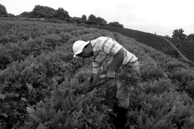 Juan José Paniagua, pionero de la agricultura ecológica en Costa Rica, en su finca de Zarcero. Fotografía de Arpad Pou.